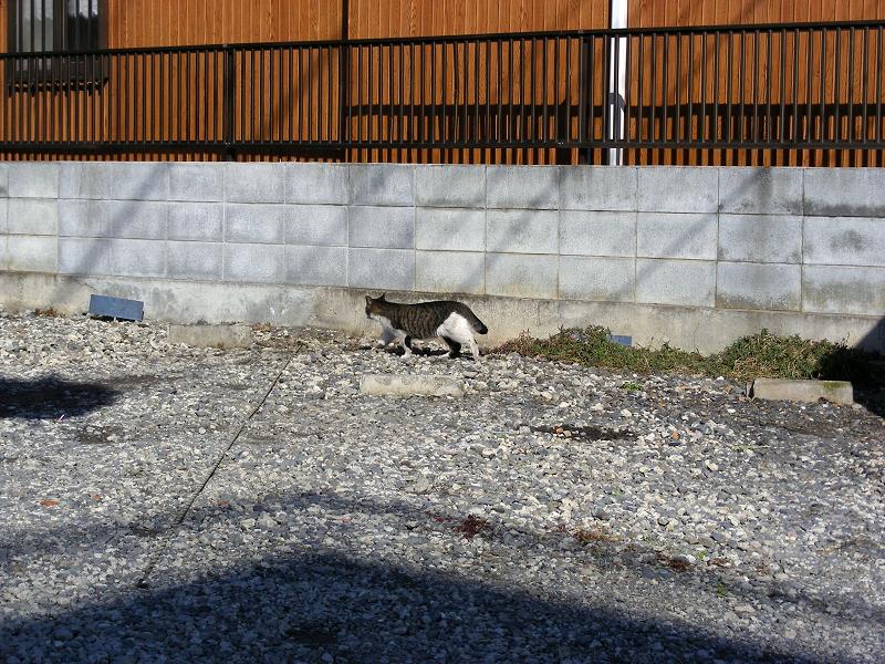 赤い壁とキジ白猫