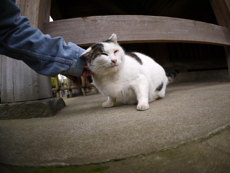 お堂の柱と白キジ猫3