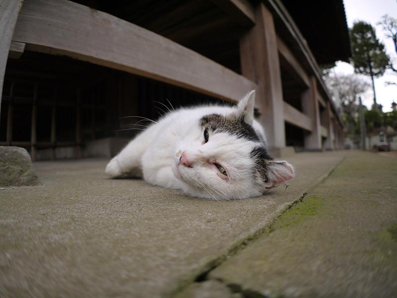 お堂の柱と白キジ猫4