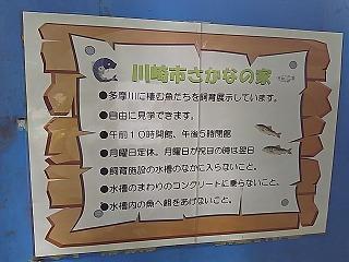 misao1-10.jpg