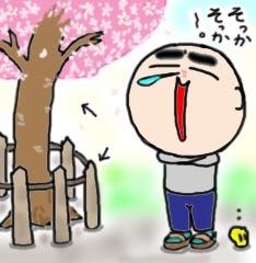 sakura-saku2.jpg