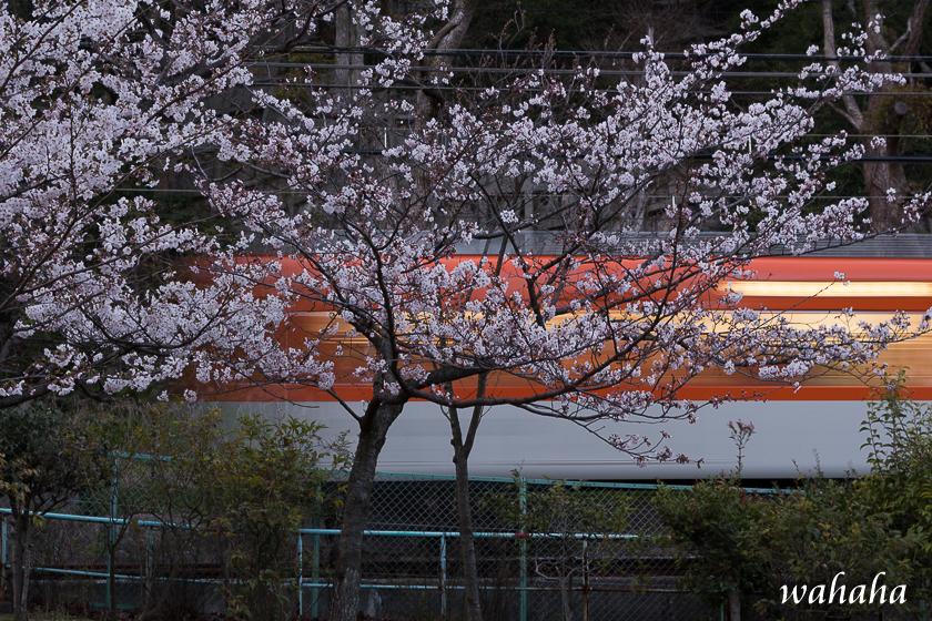 300328sumaura-3.jpg