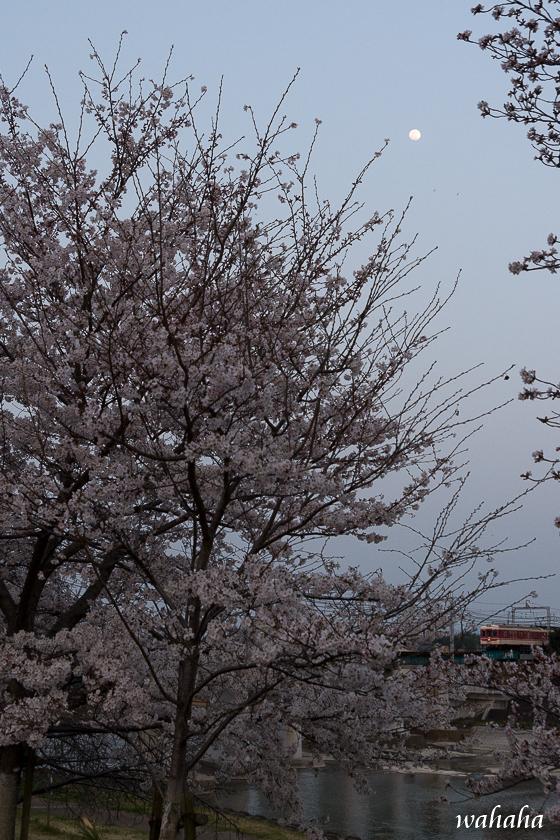 300329sintestu_minogawa-3.jpg