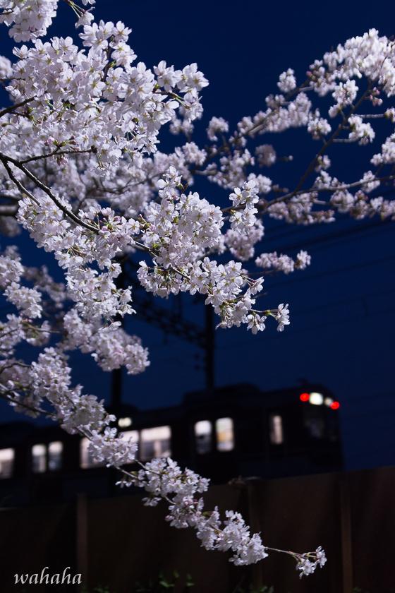 300329sintestu_minogawa-5.jpg