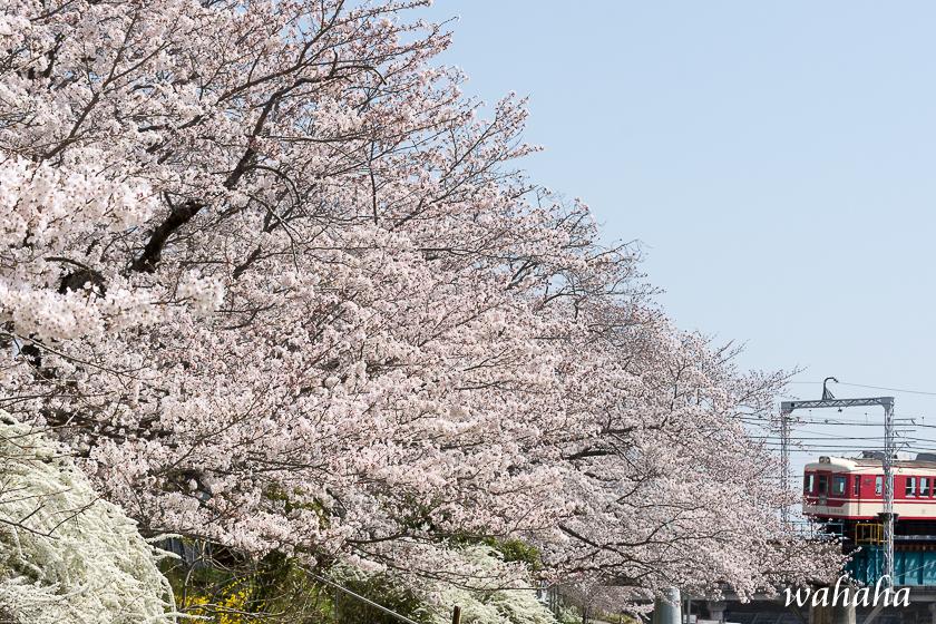 300330sintestu_minogawa-1.jpg