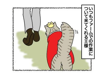 02032018_cat1.jpg