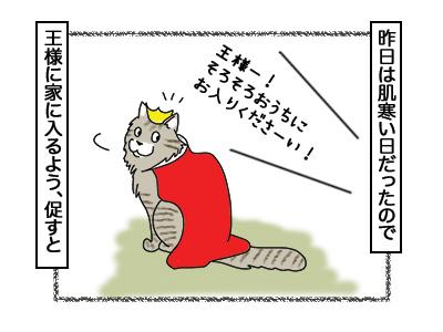 02032018_cat2.jpg
