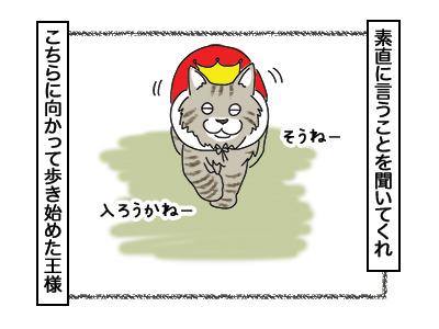 02032018_cat3.jpg