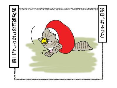 02032018_cat4.jpg