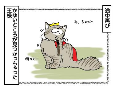 02032018_cat6.jpg