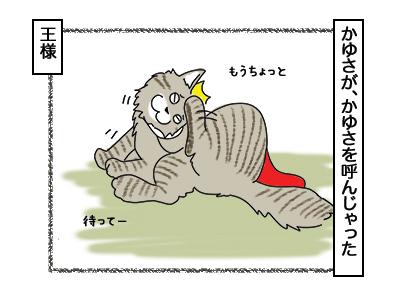 02032018_cat7.jpg