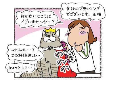02042018_cat3.jpg