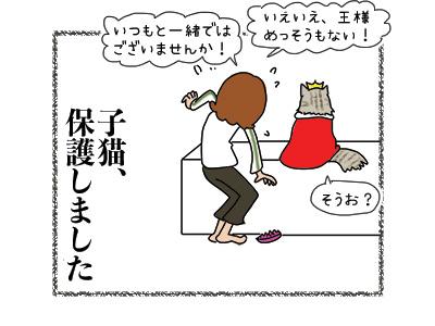 02042018_cat5.jpg