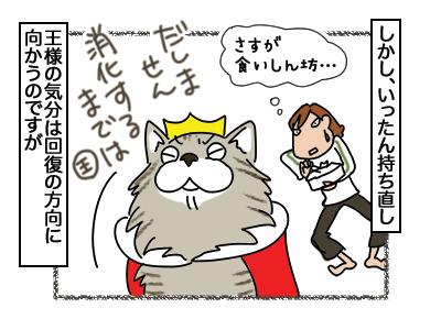 03082018_cat4.jpg