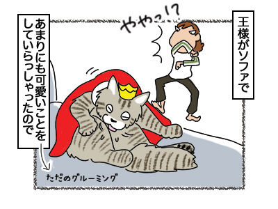 06032018_cat1.jpg