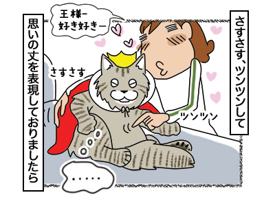 06032018_cat2.jpg