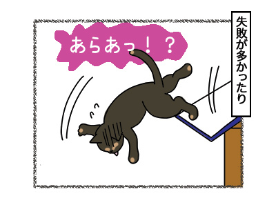 07032018_cat4.jpg