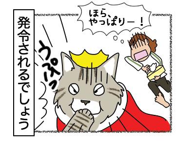 08032018_cat3.jpg