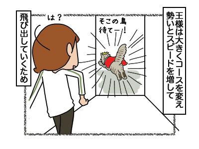 08032018_cat6.jpg