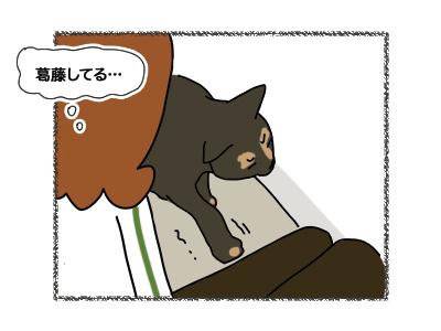 12032018_cat3.jpg