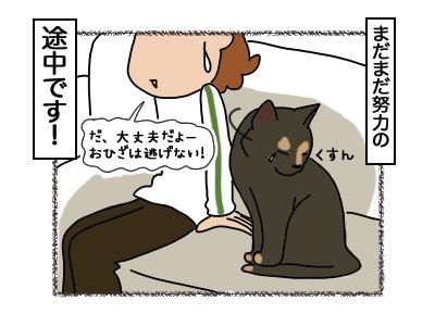 12032018_cat5.jpg