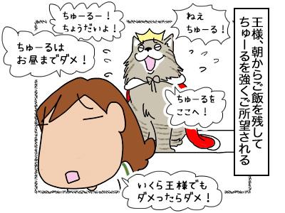 13032018_cat1.jpg