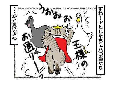 13032018_cat4.jpg