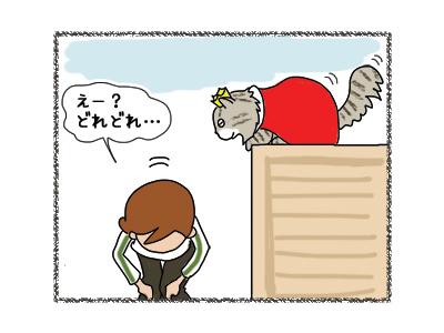 16032018_cat3.jpg