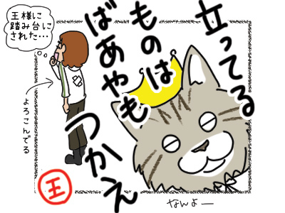 16032018_cat5.jpg