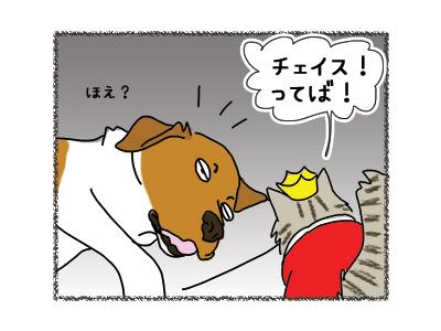 19032018_cat2.jpg