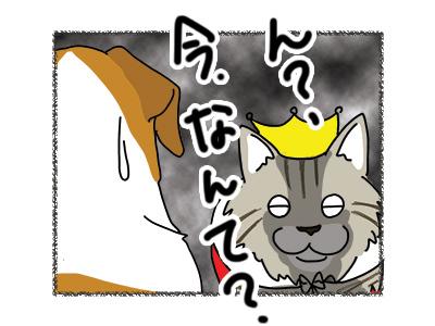 19032018_cat5.jpg