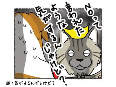 19032018_cat6.jpg