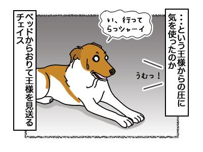 19032018_cat7.jpg