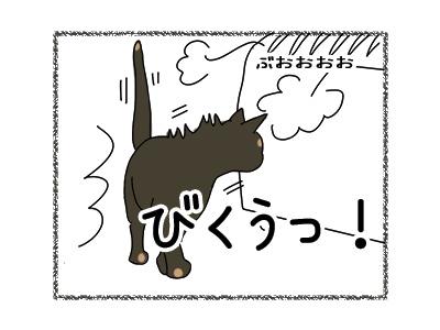 28022018_cat5.jpg