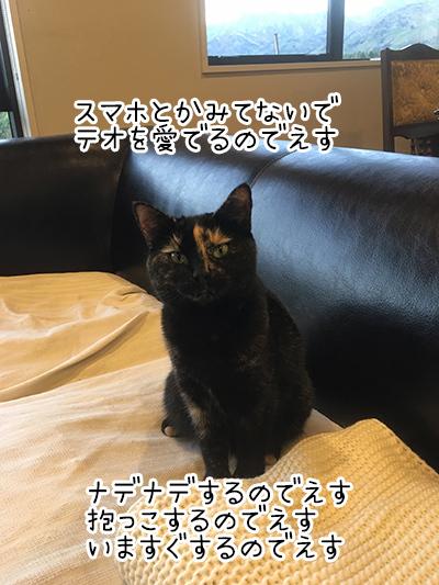 30032018_cat5.jpg