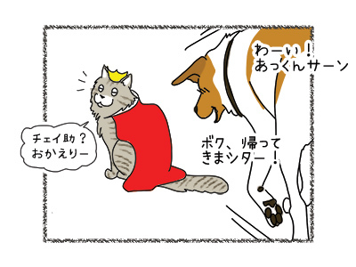 31032018_cat1.jpg