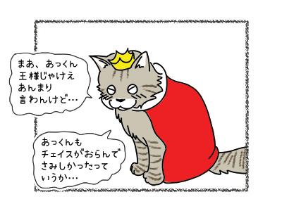 31032018_cat3.jpg