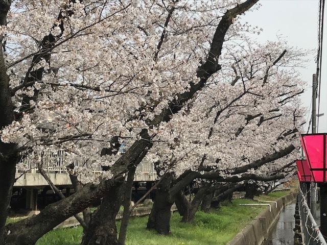 2018桜9