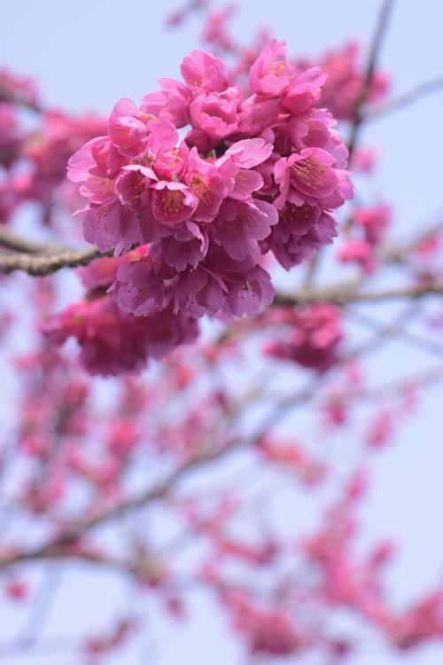 miyabi_3_29_4.jpg