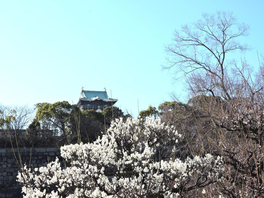 ②梅林から大阪城を見る