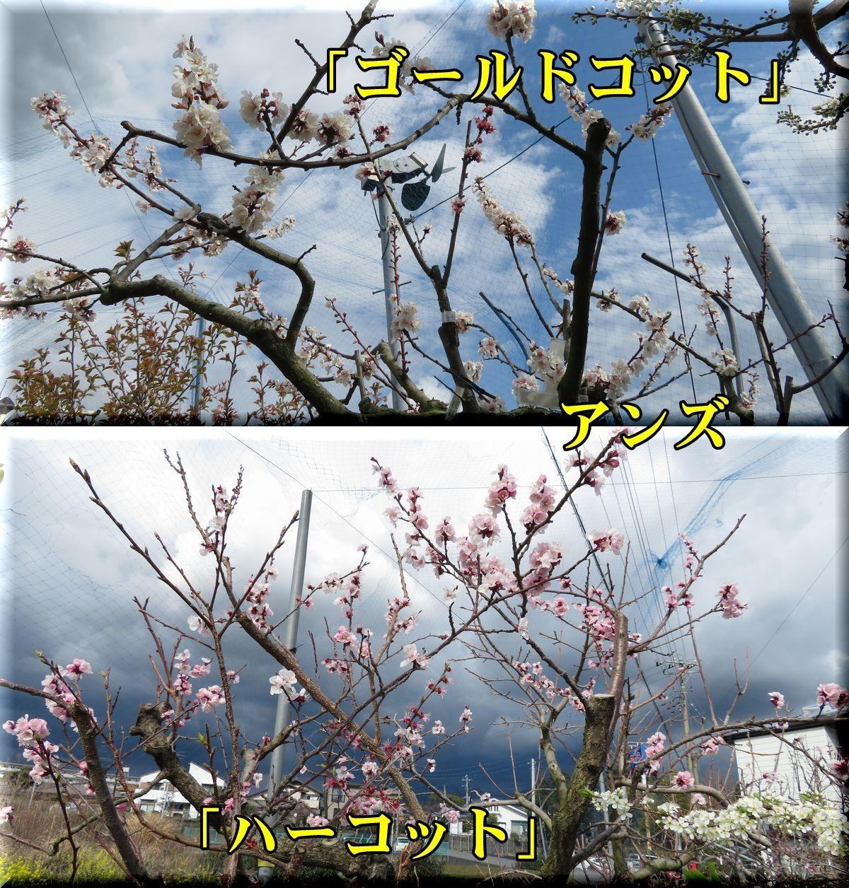 1GCot_har180323_007.jpg