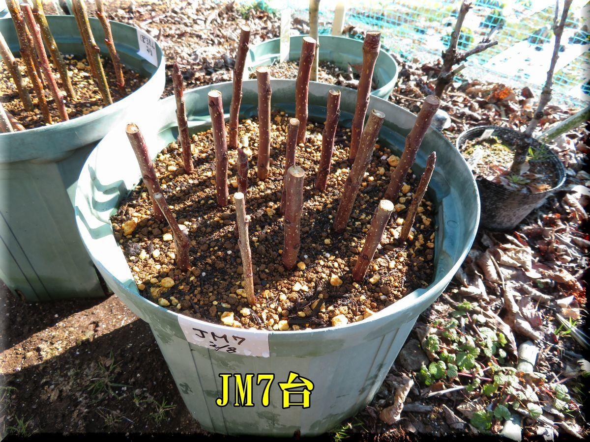 1JM180208_003.jpg