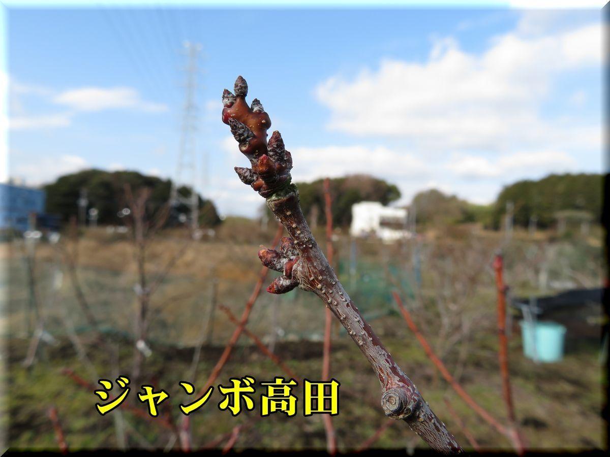1Jtakada180129_017.jpg
