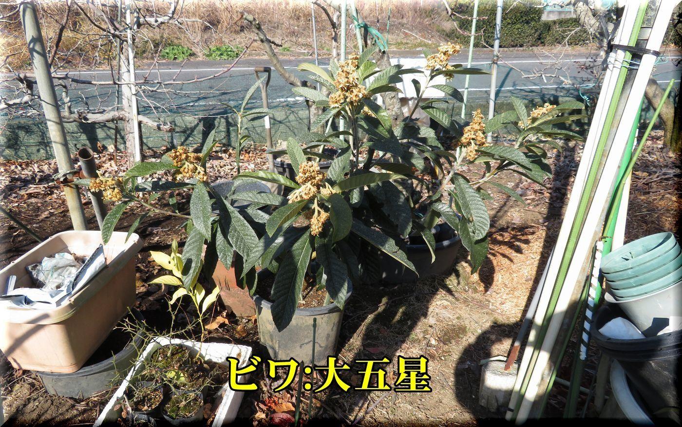 1daigosei180116_013.jpg