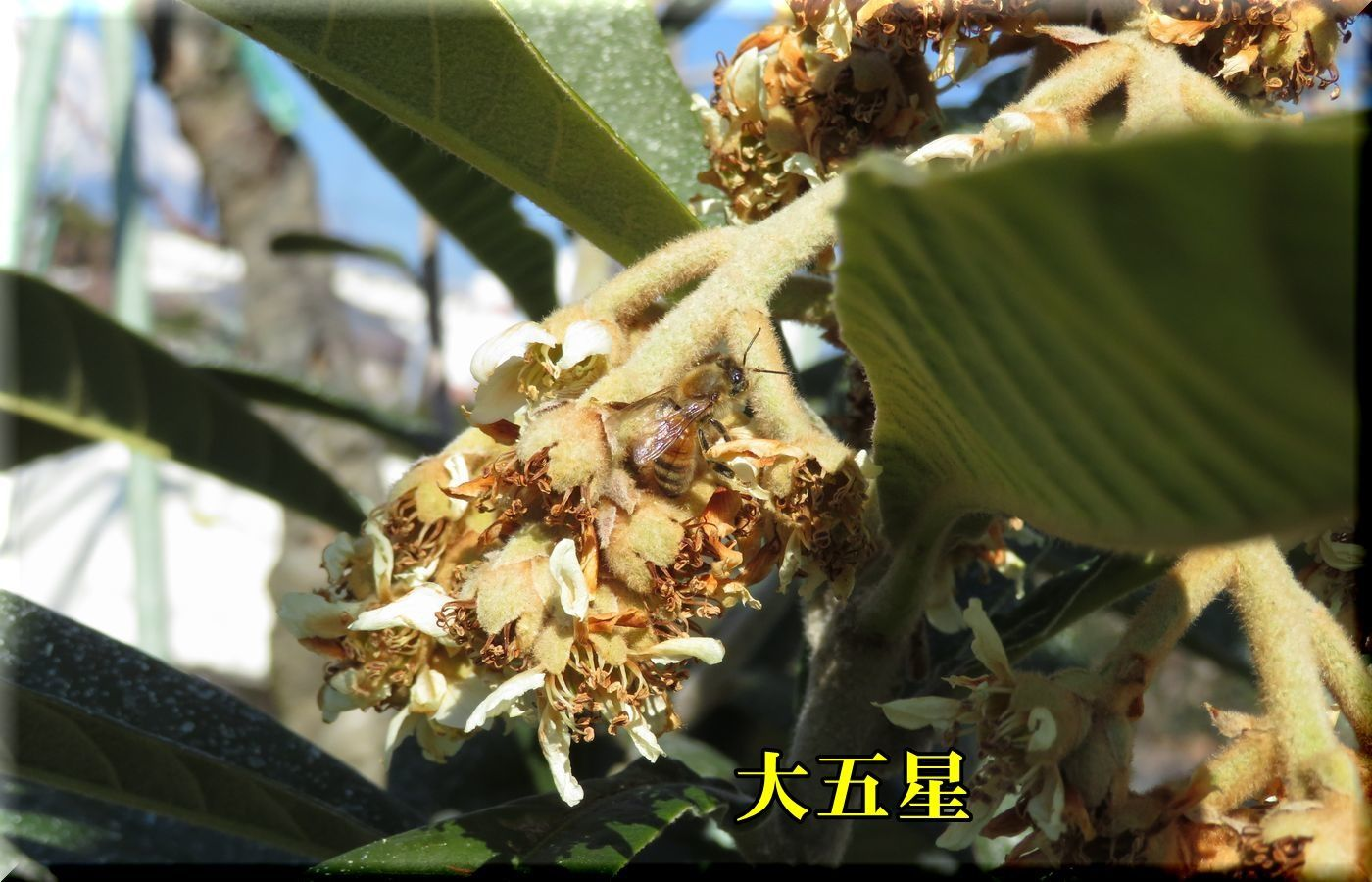 1daigosei180116_016.jpg