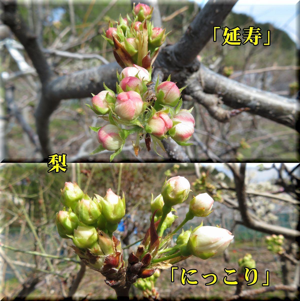 1enjyu_nikko180327_011.jpg