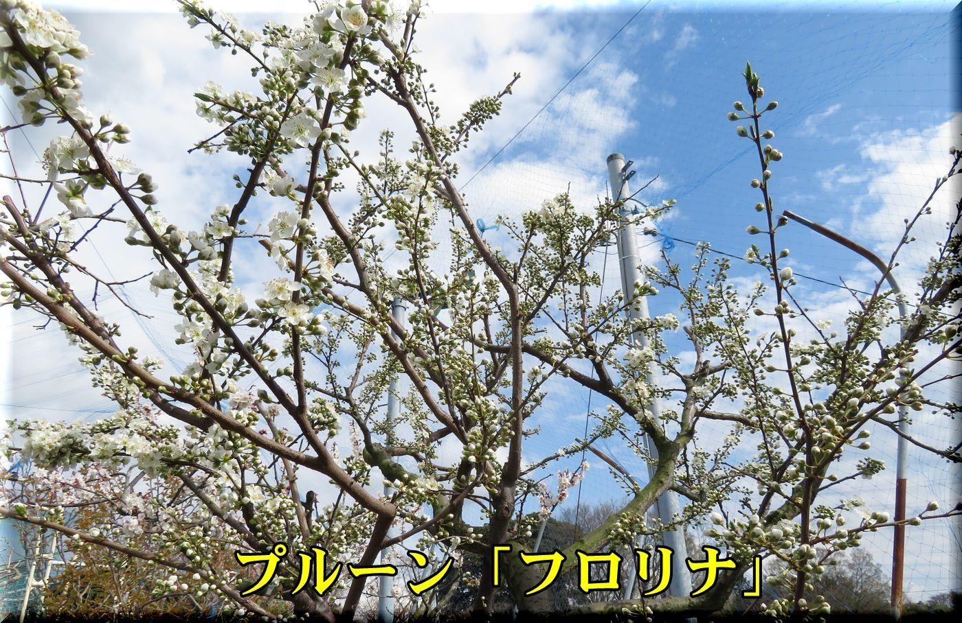1frorina180323_008.jpg