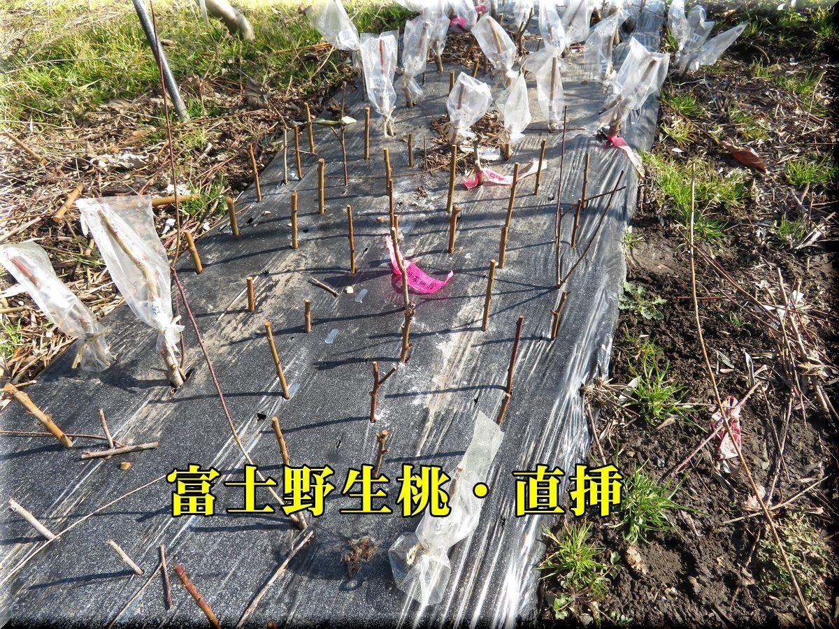 1fuji180209_005.jpg