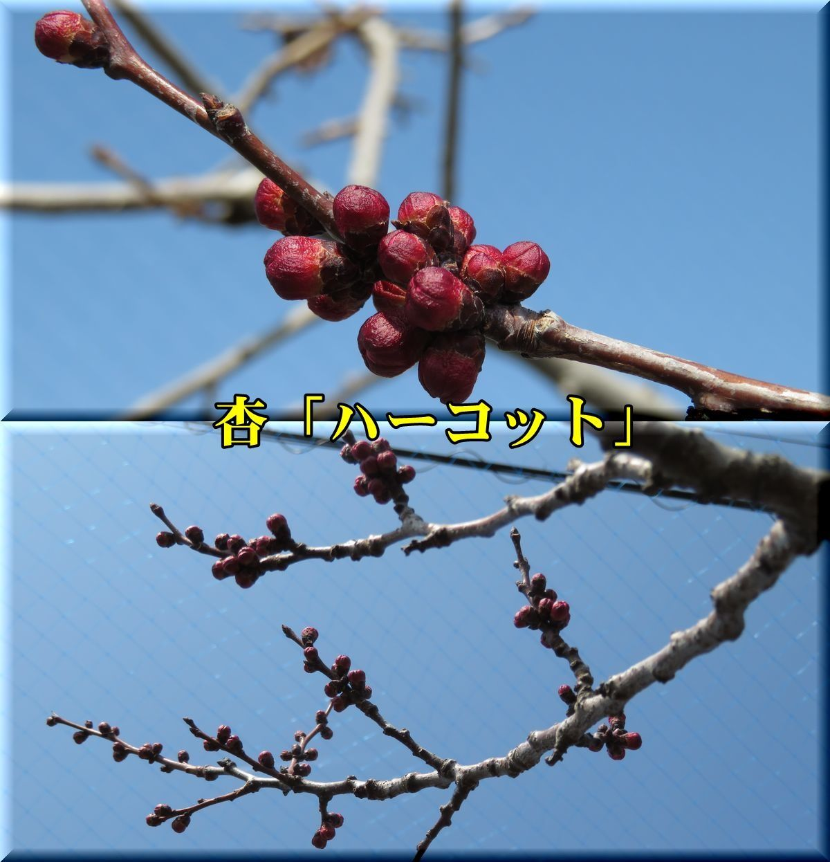 1harcot180313_041.jpg