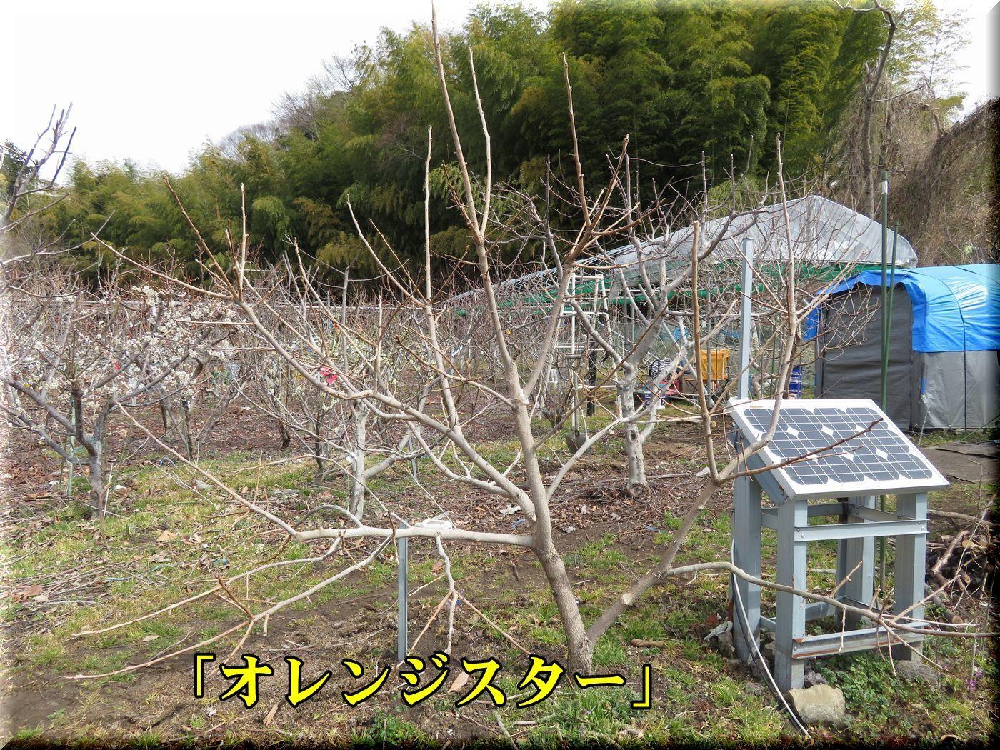1kaki180228_011.jpg